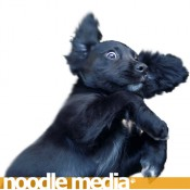 Noodle-Media logo